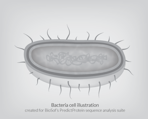 Bacteria Cell Illustration